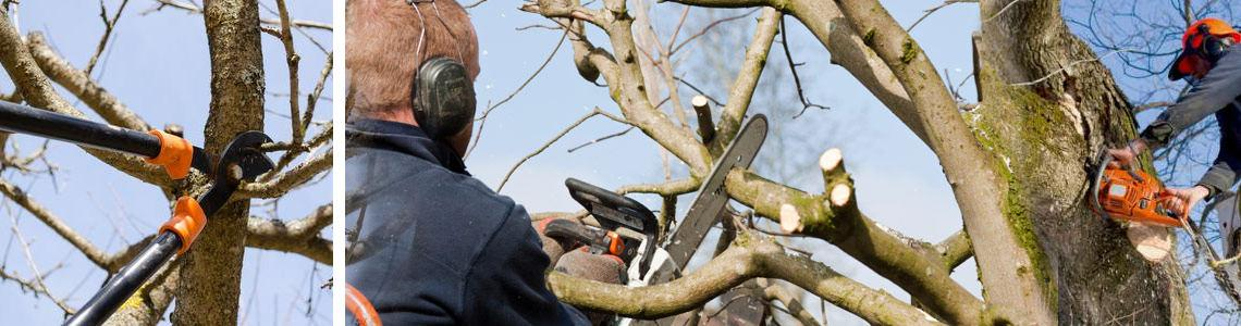 Stephen Huxtable Hedges & Smal Tree Maintenance