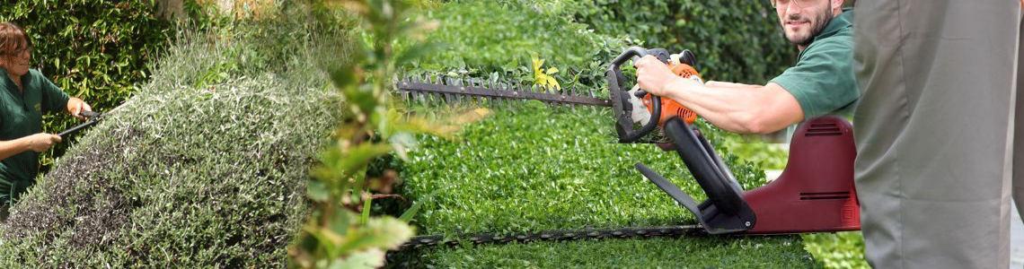 Stephen Huxtable Hedges & Small Tree Maintenance
