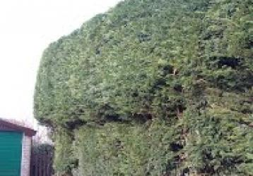 Stephen Huxtable Hedging and Tree Work